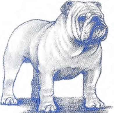 AKC Bulldog Breed Standard
