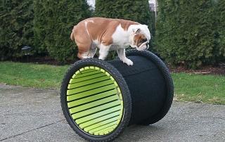Trick dog
