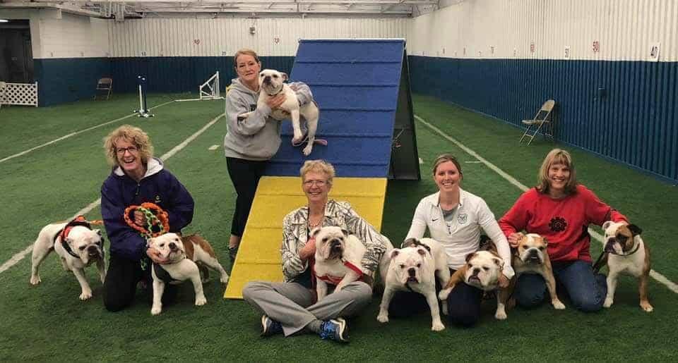 8 agility bulldogs