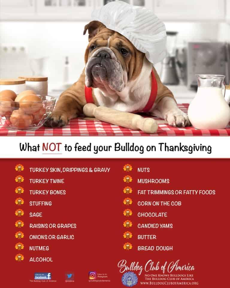Thanksgiving Bulldogs