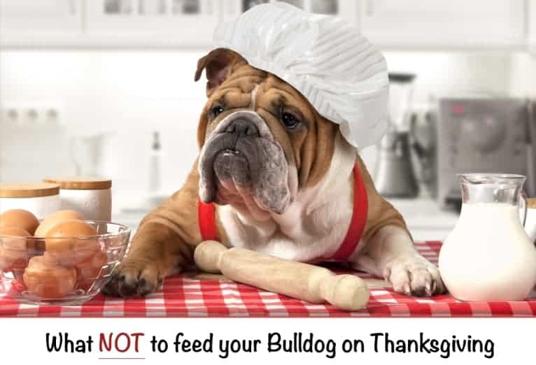 Thanksgiving Bulldogs