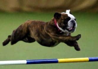 Stella Jumping