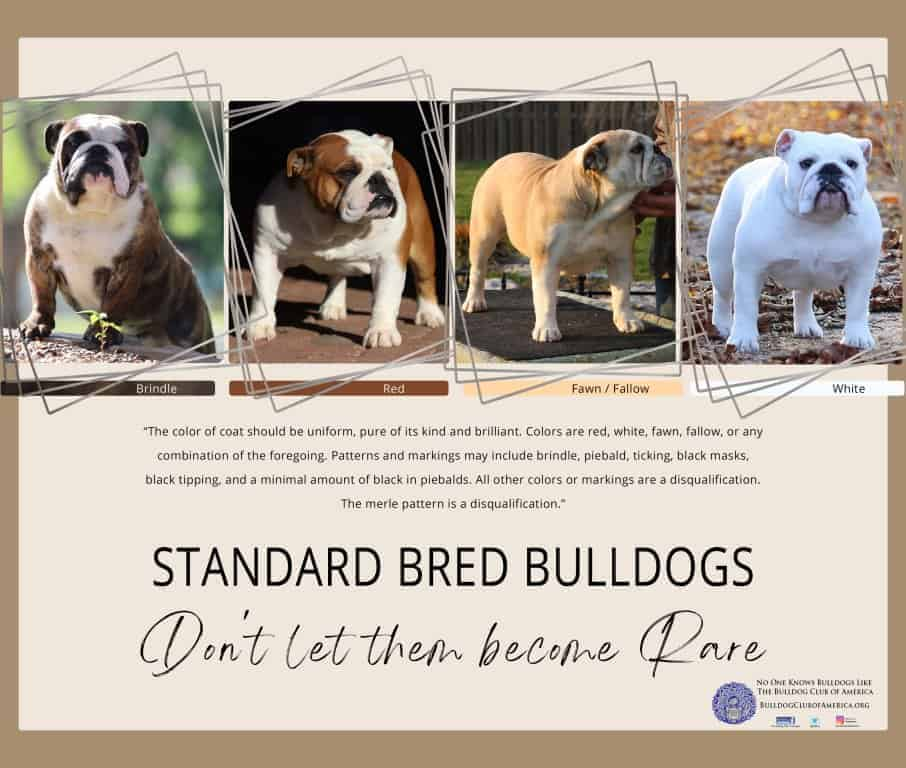 Standard Bred Bulldogs